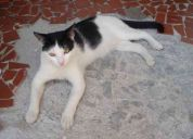 Gato perdido - macho - branco e preto