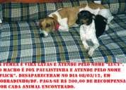 Animais desaparecidos em sobradinho / df