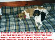 Cães desaparecidos em sobradinho / df