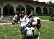 Ponei,mini cavalo,mini ponei,mansos,charrete,passeio,equitação