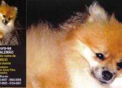 Cachorro, são josé do rio preto, procura-se 9123-6657- gratifica, bem 3232-8404 c9123-6657