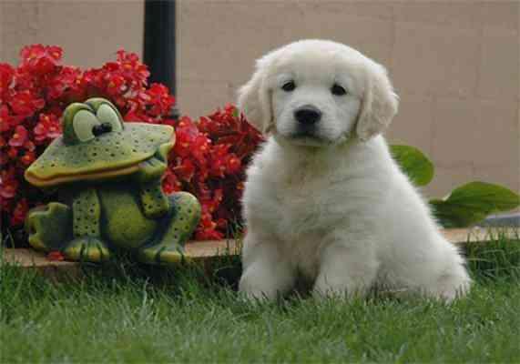 Adestrador Amigo-Adestramento de Cães em 15min por Dia!