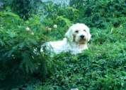 Quero meu cachorro;)
